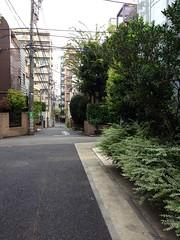 朝散歩 (2012/8/29)