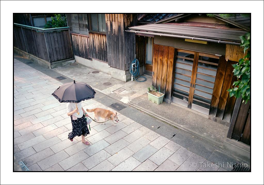 中から、犬が歩いているのを見ている / Watching a dog walking, from inside.