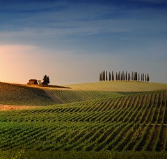 Tuscan house harmoniously set on the vineyards of Casale