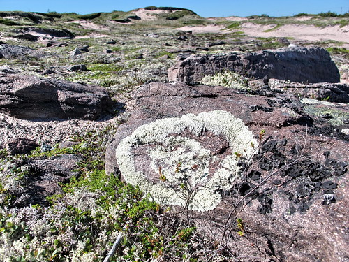 Round moss design on a rock