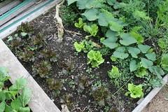 september garden plot 016