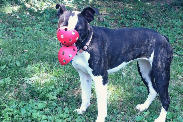 lucy and the wiffle ball 4
