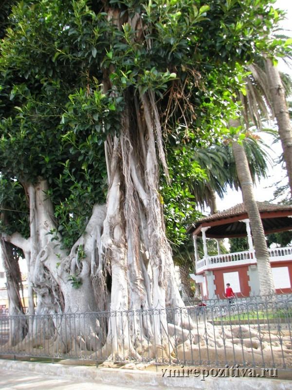 городок Икод-де-лос-Винос (Icod de los Vinos) на Тенерифе