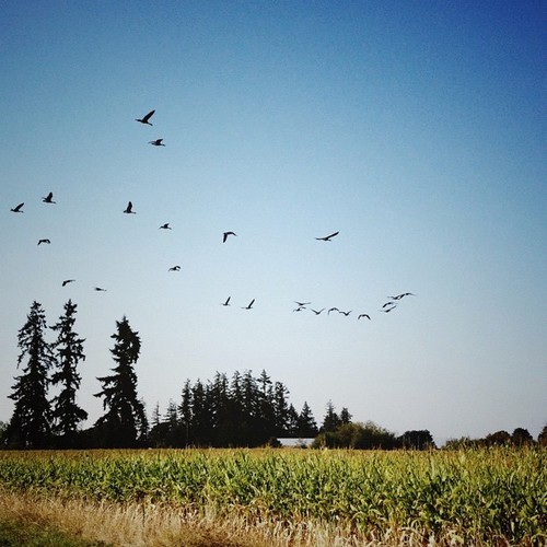 Fowl afield.