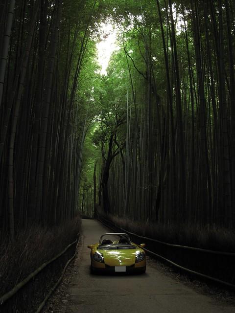 竹の小道_4576