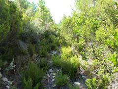 Chemin de la Montagne aux Plages : le sentier de montée vers Livisani