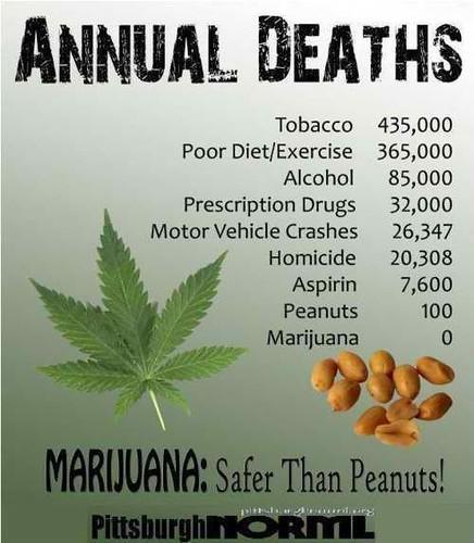 marijuana-is-safe-than-peanuts-medical-marijuana-dispensaries-thcfinder