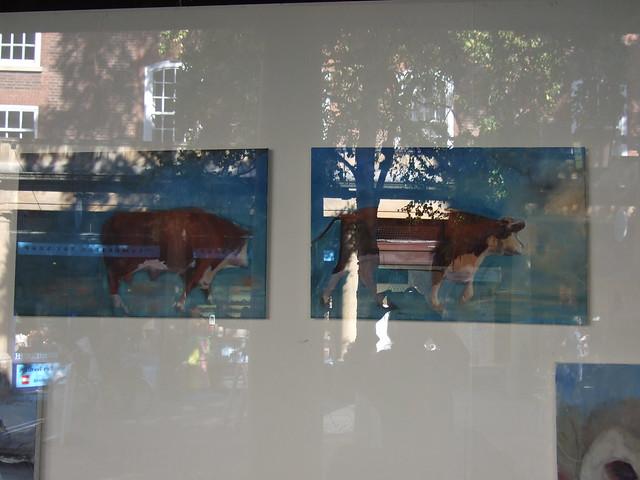 Litherland 2 cow pics