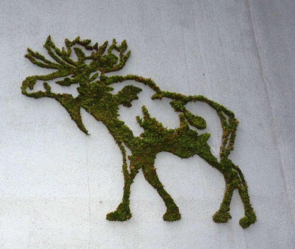 Moss Moose Graffiti