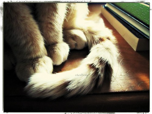 soft paws in sunlight by cherithsky