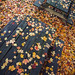 it's raining leaves by jaki good miller