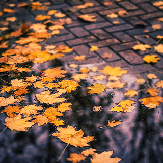Of Leaves and Puddles