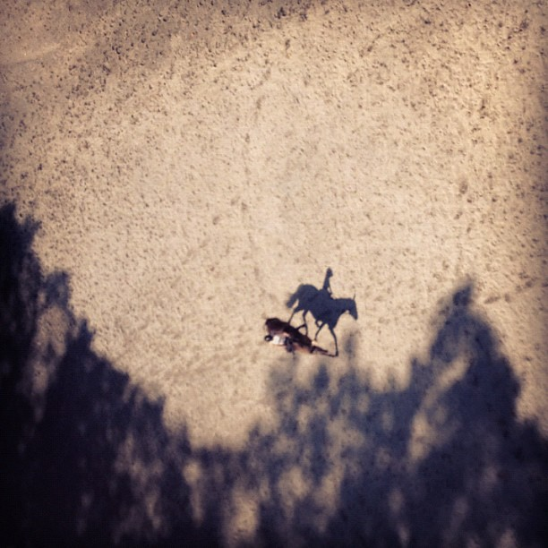 I've been smelling horses while crossing the Taft Bridge all year - finally saw one. #horseshadow