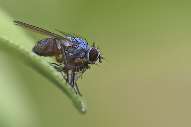 photo of fly