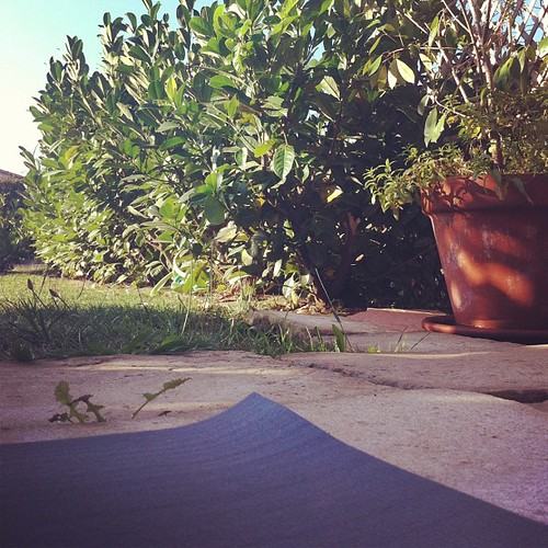 View from my #yoga mat this morning... happy #Sunday ... #theviewfromhere