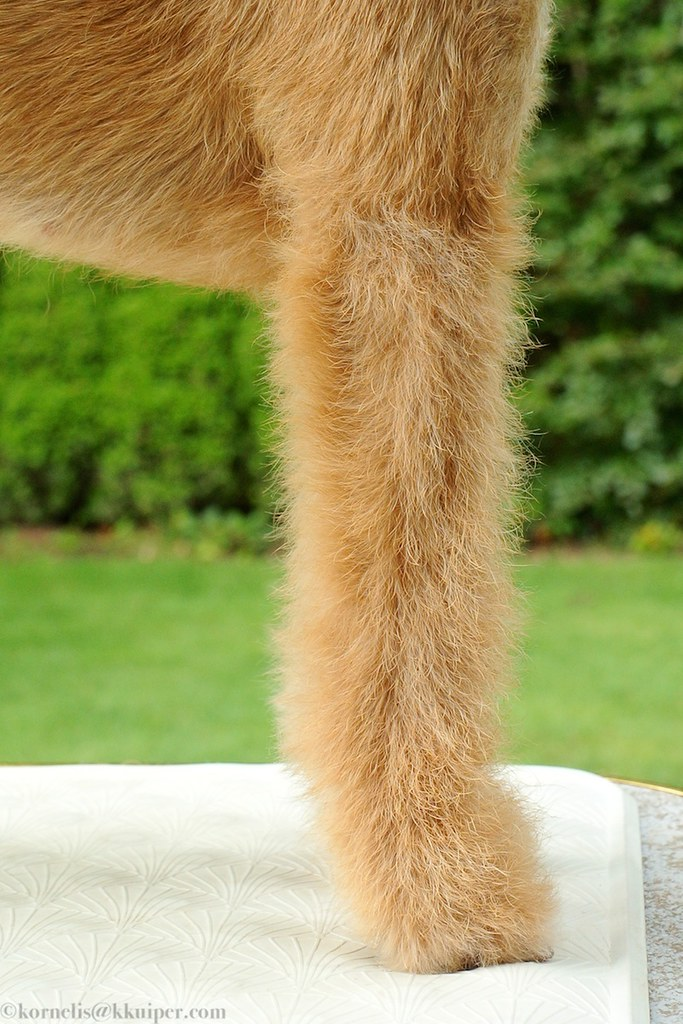 Side of front legs - after