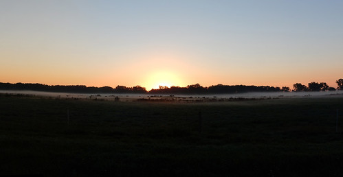 09-18-2016 Ride, cows in the fog at sunrise