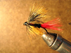 rogue river red ant