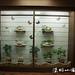 20120526 2012陽明山蝴蝶季-大屯遊客服務站(韓志武攝)DSC_3327