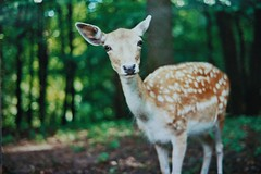 [Free Images] Animals 1, Mammals, Deers ID:201209080400
