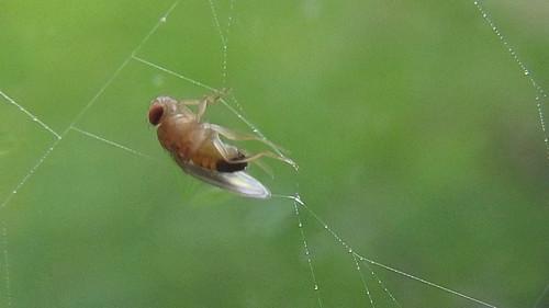 Fly in a web