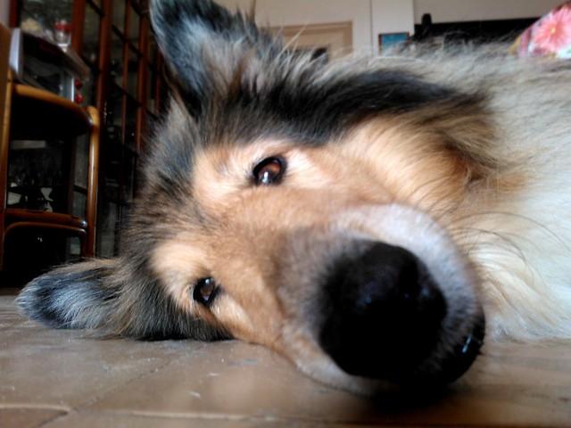 Floor dog 1 por Hermione Black