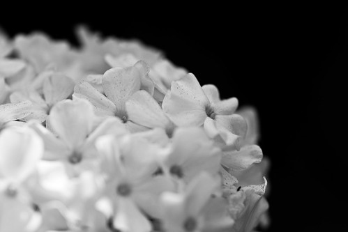 239 flowers