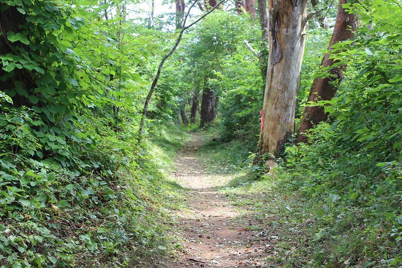 魹ヶ崎灯台への道 その2