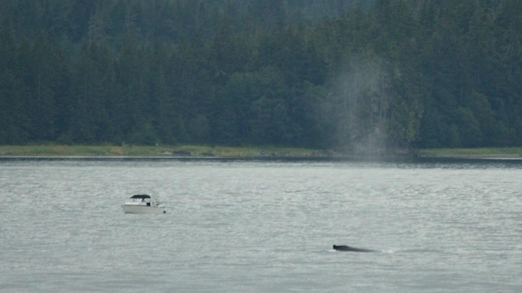 Alaska Cruise_20120903_150843