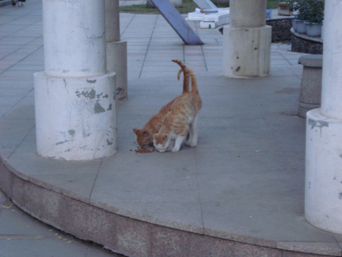 Cats in Shenyang, China _ 0145