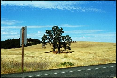 california road trees sky art film field grass sign clouds 35mm landscape photography photo highway signage nikonfm10 pasorobles c41 50mmlens kodak400gc nikonserieselens