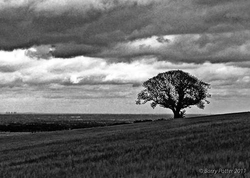 blackwhite nikon pocklington eastyorkshire barrypotter valeofyork yabbadabbadoo eastridingofyorkshire yorkshirewolds nikond40 barrypotternet afsnikkor18105mm1556ged edenmedia barrypotteredenmedia