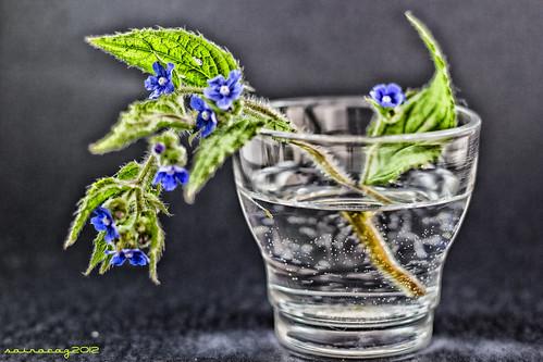324/365 Flores CLXXVIII by sairacaz