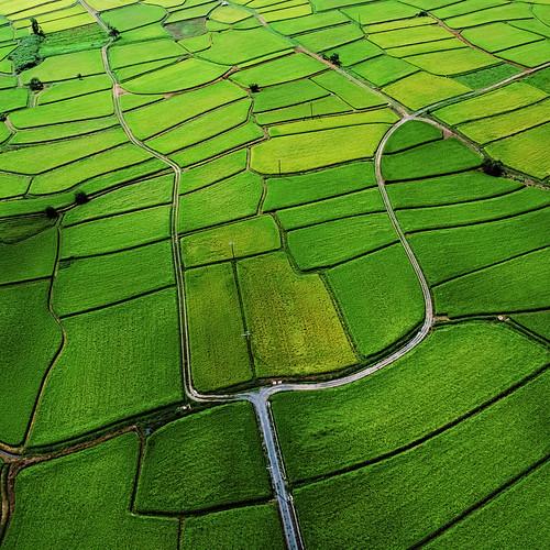 [フリー画像素材] 自然風景, 田園・農場, 緑色・グリーン ID:201210021200