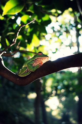 [フリー画像素材] 動物 2, 両生類, 蛙・カエル ID:201210060400