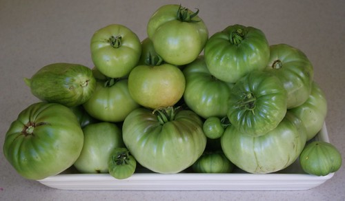 greentomatoes3