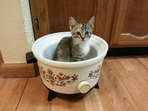 Corning Country Festival Crock Pot & Kitten by Jade-Li