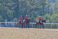 2012-10-06 (17) r1 Maryland Million - pony people