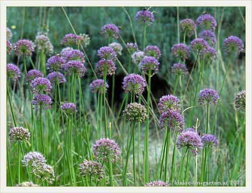 garden linz botanical austria österreich garten oberösterreich boga botanischer upperaustria