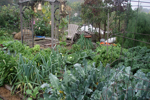 wet fall garden plot