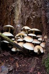 Fungi Forage on Ashridge Estate
