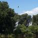 Riverbend Ponds_MIN 325_25_pelican