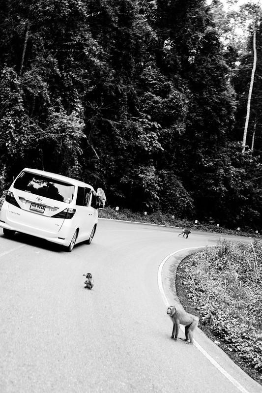 THAI2016_-351