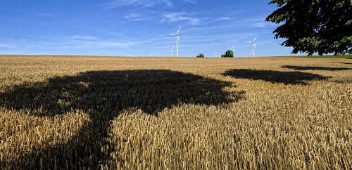 Harvest Luxembourg