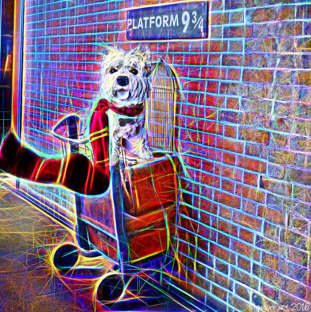 Platform 9¾ for Dogwarts Express