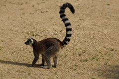 au jardin zoologique de Champrepus