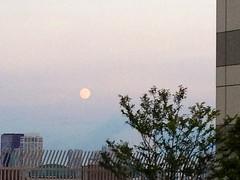 夕方の空に満月、アトレ恵比寿屋上 (2012/8/31)