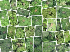 Collage of orangutan nests