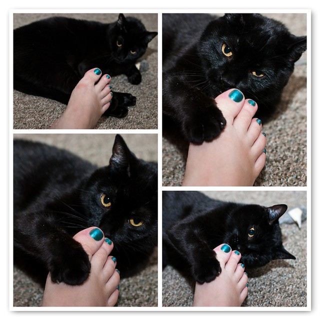 Donner and the shiny turquoise nail polish