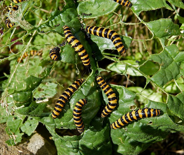 how to get caterpillars off plants
